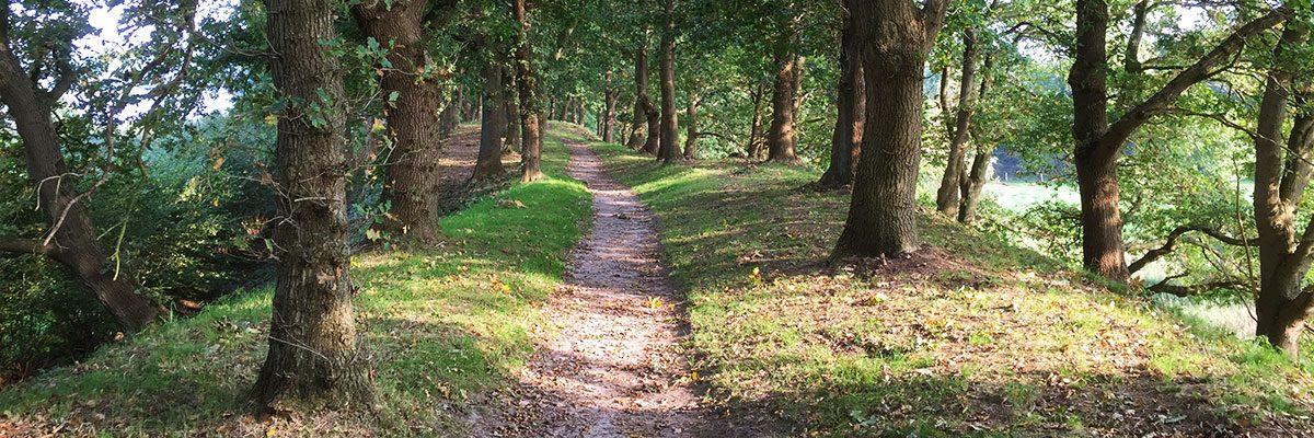 Sti i skoven